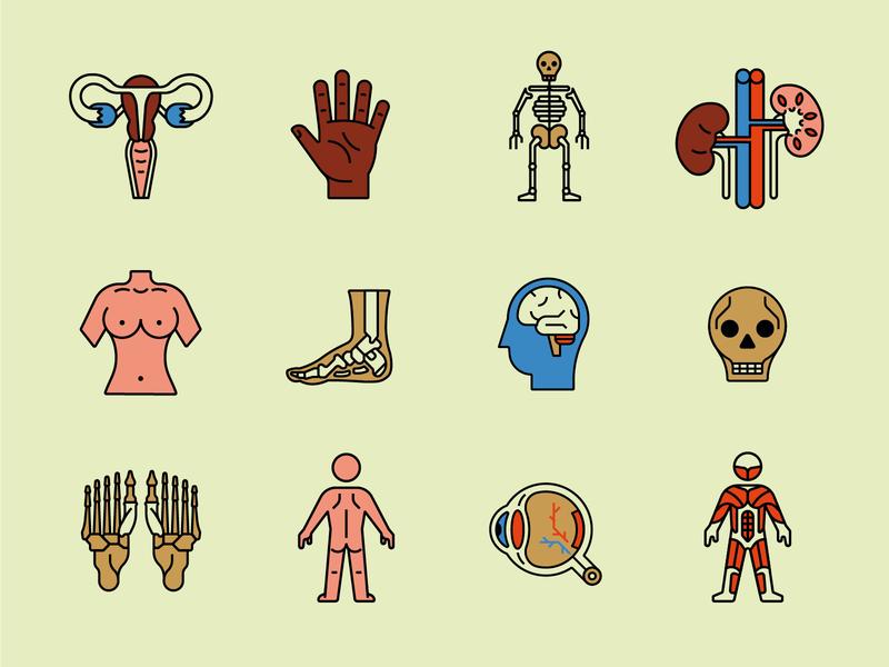The Body Icon set healthcare anatomy icons illustration