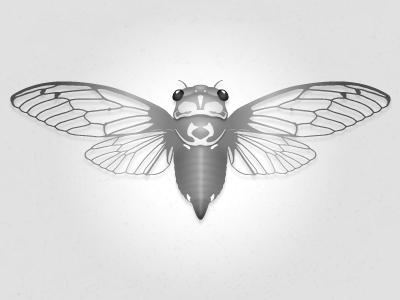 Cicada work in progress