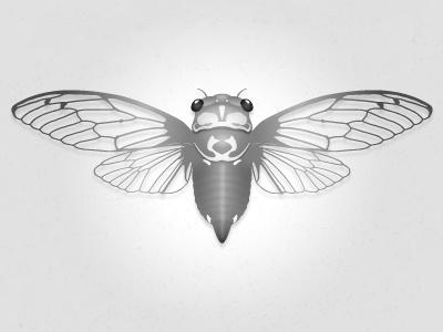 Cicada work in progress cicada