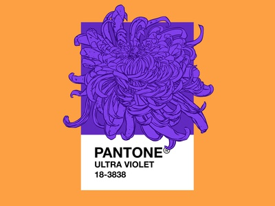 PANTONE Ultra Violet trending design 2018 flowers illustration violet ultraviolet pantone