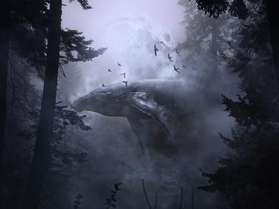 Humpback Forest photo manipulation