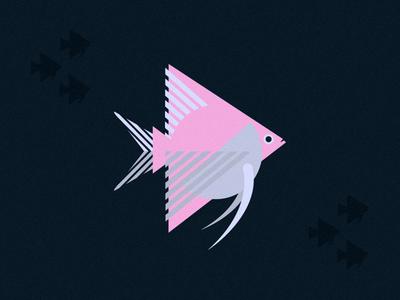 Fish Friday: Angelfish