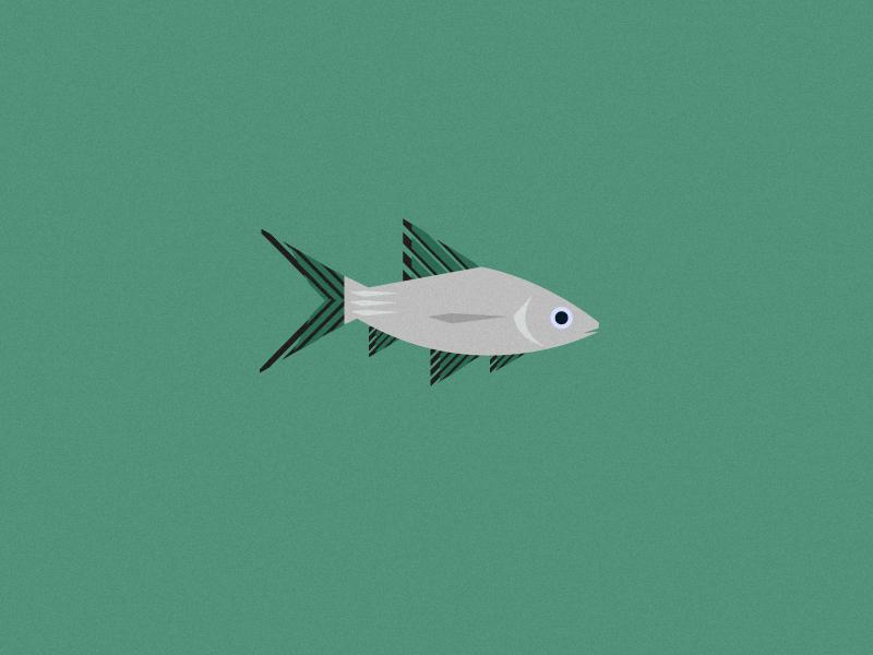 Fish Friday: Bala Shark grain noise illustrations challenge b earth enviroment friday bala shark character sealife coastal sea fish illustrator vector jrdickie design illustration