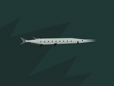 Fish Friday: Flat Needlefish