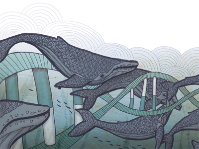 Whales whales humpback dna ocean migration illustration
