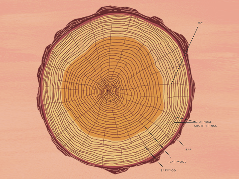 Cross Section By Julia Kuo On Dribbble