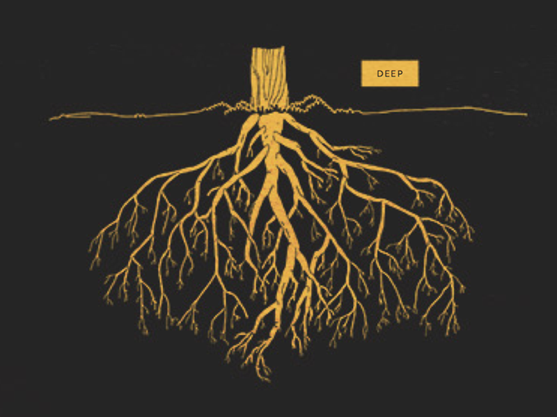 Deep Roots by Julia Kuo Dribbble Dribbble