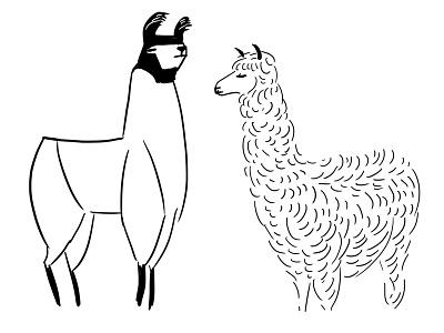 Llama And Alpaca linework book drawing nature illustration alpaca llama