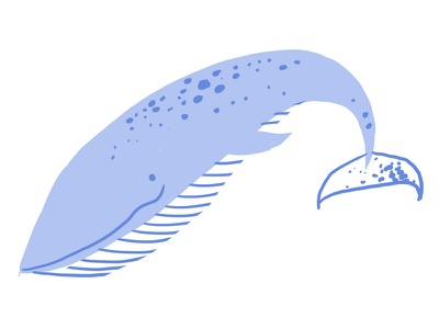 Blue Whale drawing nature illustration sea mammal ocean whale