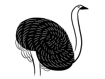 Ostrich bird illustration drawing nature bird ostrich