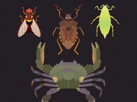 DPIRD Pest Illustrations