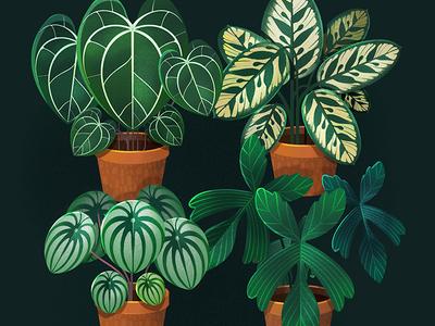 Plant Studies botanicals botanical botanical art plant art procreate plant illustration plants illustration