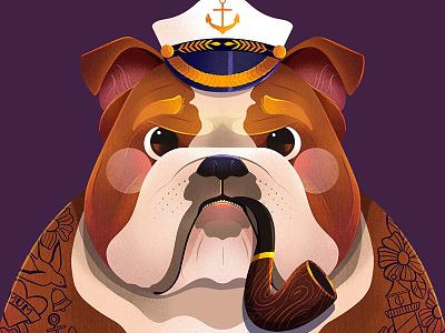 Sailor Bulldog sailor illustration sailor bulldog illustration dog illustration dog bulldog procreate illustrator kidlit childrens illustration illustration
