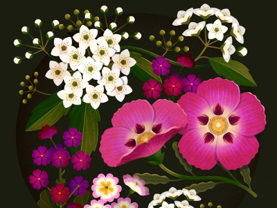 Flower Studies 2 procreate botanical illustration botanics botanical flowers illustrator illustration