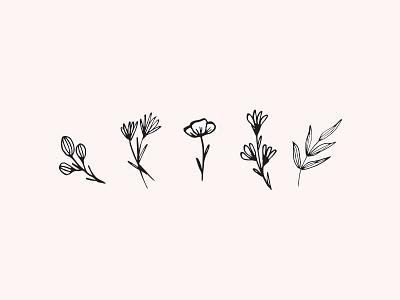 Floral sketches outline illos branding plants line drawing ink illustration botanical sketches illustration flowers