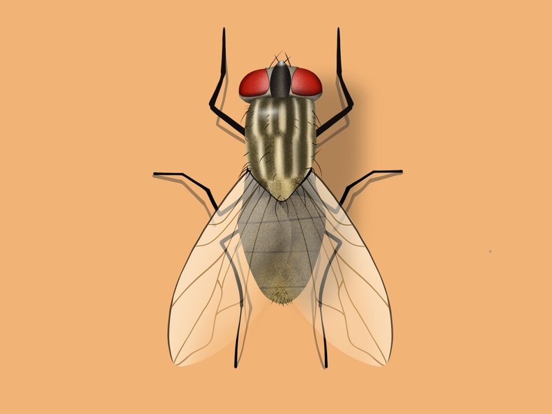Fly mobile illustration clean inspired inspiration insect fly web illustration ux ui icon ui design