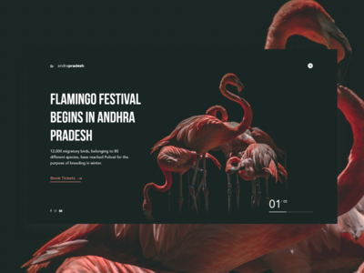 Flamingo Festival - shot 20/50