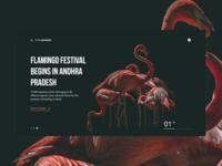 Flamingo Festival - shot 20/50