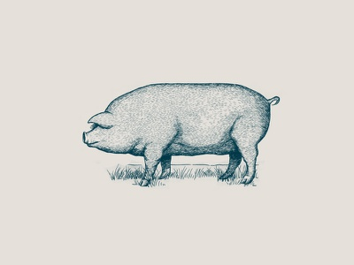 Pig illustration hand drawing vintage micron pen branding illustration