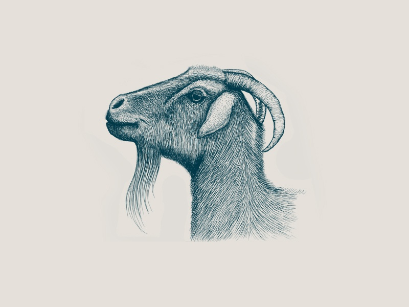 Goat Illustration Micron Pen Drawing