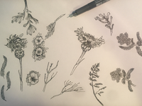 Work in progress, ink and flowers