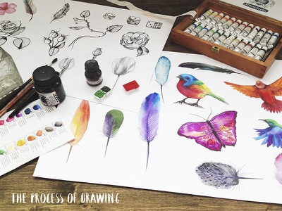 Watercolor and graphic quality birds bird feathers watercolor rose thorns hummingbird butterfly ink graphite pencil poppies bud