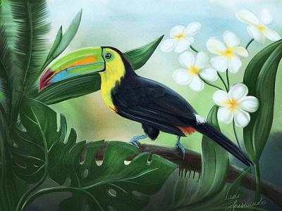 The Toucan toucan bird applepencil ipadpro art digital
