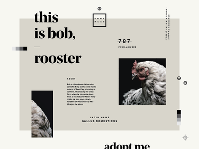 Daily UI - 006 - User Profile chickens user profile daily ui