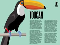 Toucan - flyer