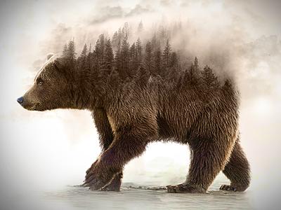 bear (photo manipulation) photomanipulation tutorial nature bear photo photoshop