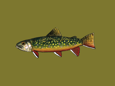 Brook Trout native fly fishing illustration design watercolor gouache sticker river great smoky mountains blue ridge mountains appalachians appalachia fishing fish brout trout trout brook