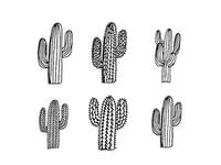 Cactus x6