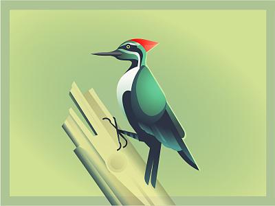 Mr Woodpecker adobe animal nature wood green gradient vector woodpecker illustration bird