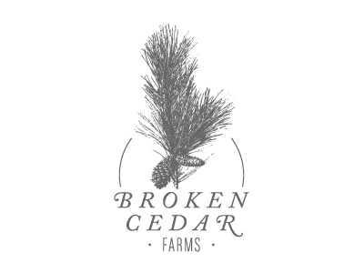 BCF Exploration 2 broken cedar farms logo design pine needles cone