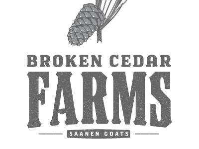 BCF Exploration 3 broken cedar farms logo design pine needles cone