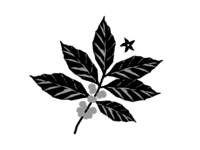 Coffee Plant Concept