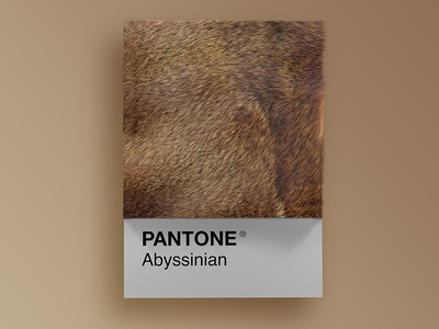 Cat Breeds as Pantone - Abyssinian visual render pantone palette design colors cinema4d cats cat art animals 3d