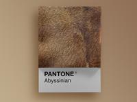 Cat Breeds as Pantone - Abyssinian