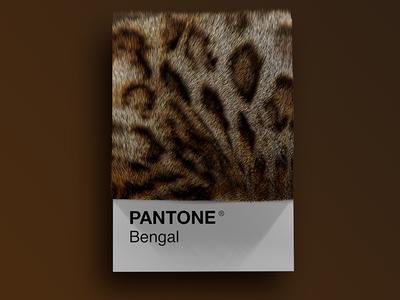 Cat Breeds as Pantone - Bengal visual render pantone palette design colors cinema4d cats cat art animals 3d