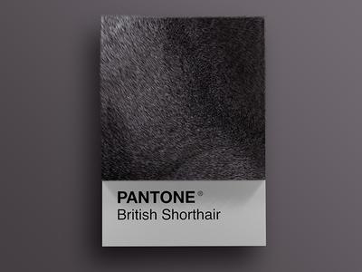 Cat Breeds as Pantone - British Shorthair visual render pantone palette design colors cinema4d cats cat art animals 3d
