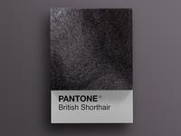 Cat Breeds as Pantone - British Shorthair