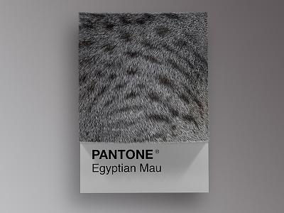 Cat Breeds as Pantone - Egyptian Mau visual render pantone palette design colors cinema4d cats cat art animals 3d