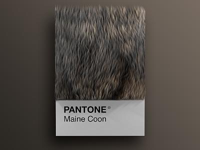 Cat As Breeds as Pantone - Maine Coon visual render pantone palette design colors cinema4d cats cat art animals 3d