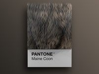Cat As Breeds as Pantone - Maine Coon