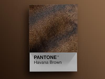 Cat Breeds as Pantone - Havana Brown visual render pantone palette design colors cinema4d cats cat art animals 3d