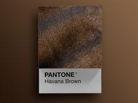 Cat Breeds as Pantone - Havana Brown