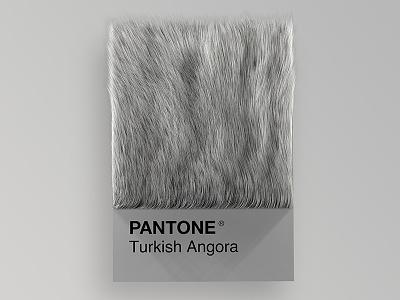 Cat Breeds as Pantone - Turkish Angora visual render pantone palette design colors cinema4d cats cat art animals 3d