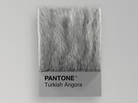 Cat Breeds as Pantone - Turkish Angora