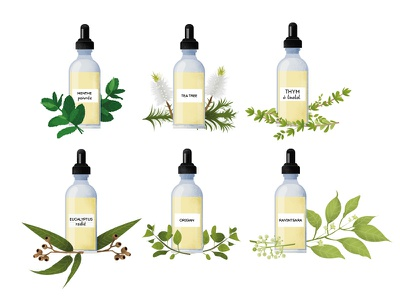 Essential oils vector illustration oregano eucalyptus thyme tea tree mint essential oils