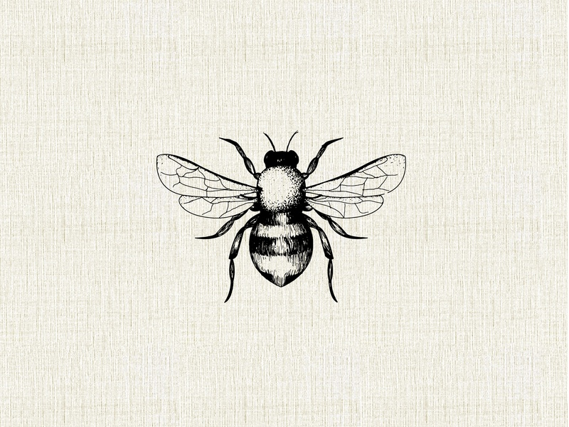 Bee Illustration By Lillian Oeding On Dribbble